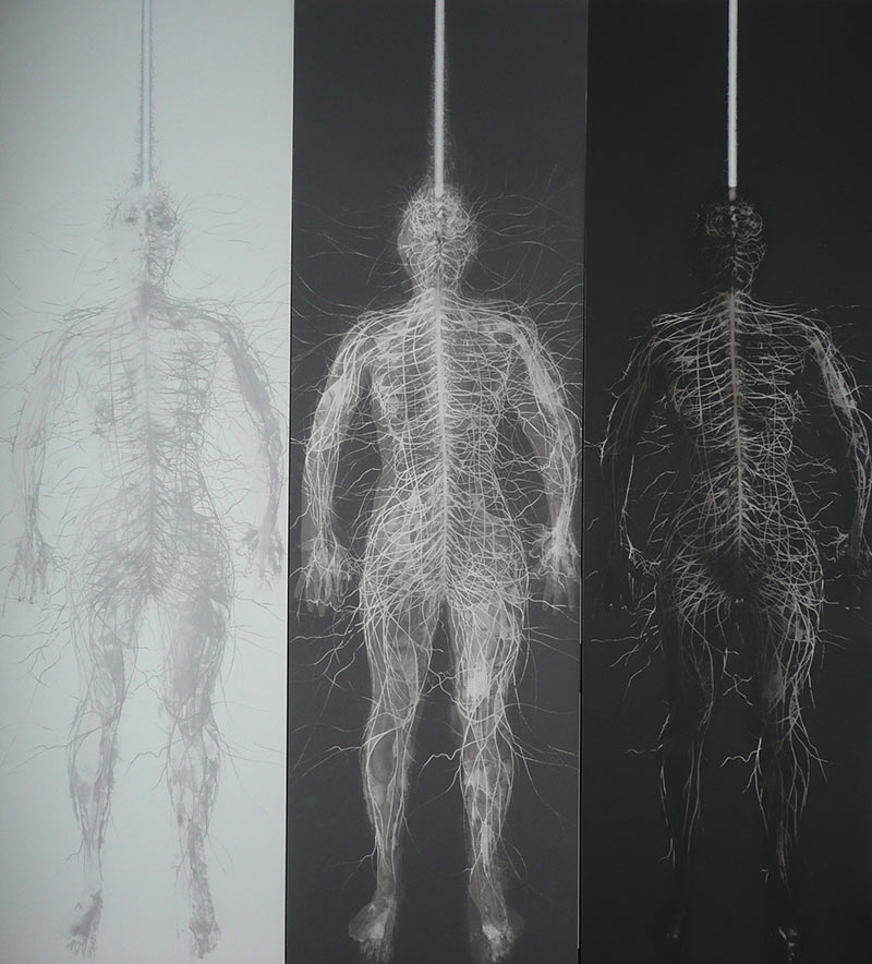 'Transience – Triptych'